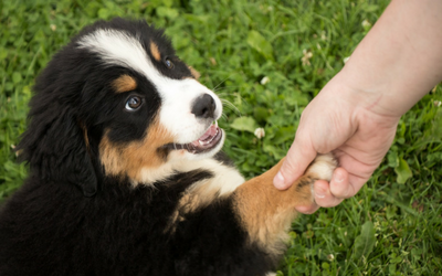 image for Spread the Joy on National Puppy Day!